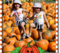 pumpkinpatch_300
